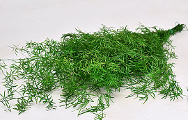 Asparagus H80cm