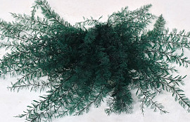 Air Fern 20cm Dark Green 5-Pack