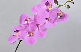 Phalaenopsis Spray Pink 88cm
