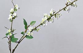 Cherry Blossom White 115cm