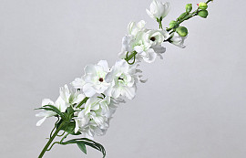 Delphinium Spray White 91cm