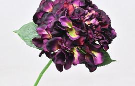 Hydrangea Dark Purple 40cm
