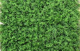 Green Fern Mat 100x100cm