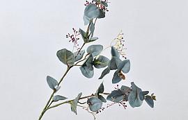 Seeded Eucalyptus 67cm