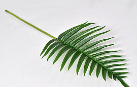 Fern Palm Green 65cm