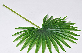Fan Palm Green 50cm