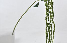 Amaranthus Green 66cm