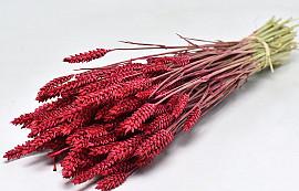 Triticum Red (wheat) 70cm
