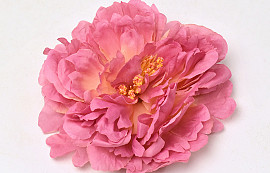 Peony D18cm Old Pink