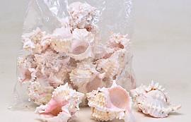 Shells Pink Murex 1kg