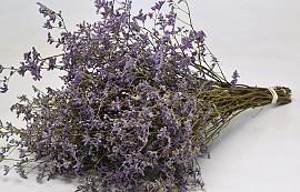 Limonium Violet 25pcs Big Pack