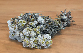 Edelweiss, Anaphalis 25cm