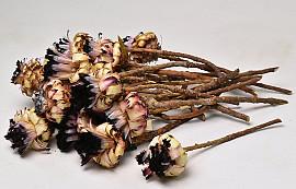 Protea Neriifolia 20-Pack