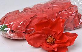 Magnolia D17cm Rouge