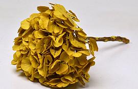 Hydrangea preserved Yellow D16cm