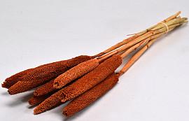 Bunch of Babala 8pcs Orange