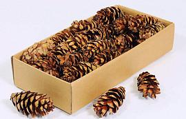 Strobus 7-9cm 40-Pack