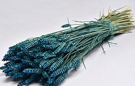 Bouquet Triticum Bleu (blé) 70cm