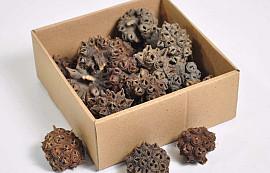 Spidergum Cones 5-7cm 20-pack