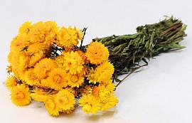 Bouquet Helichrysum Jaune 45cm