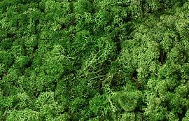 Rendiermos Groen Mix per kg