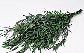 Eucalyptus Nicoly 75cm