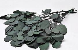 Eucalyptus Populus Green 65cm