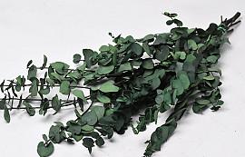 Eucalyptus Stuartiana Green 65cm