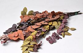 Eucalyptus Stuartiana mix 65cm
