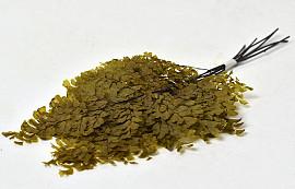 Adianthum Fern H25cm 6pcs Olive