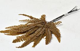 Ribbon Fern 15-20cm Yellow