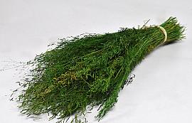 Munni gras Groen 60cm