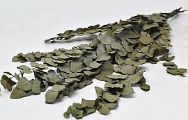 Dried Eucalyptus Green 65cm
