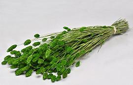 Bouquet Phalaris Vert Clair 70cm