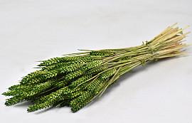 Triticum Green (wheat) 70cm