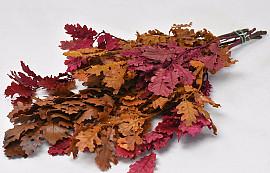 Oak Leaves Mix 50-60cm