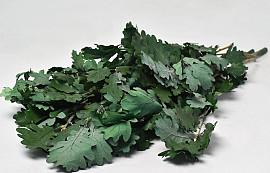 Oak Leaves Green 50-60cm