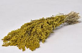 Briza Minima 40cm Yellow