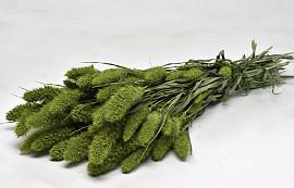 Setaria Green 65cm