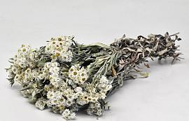 Edelweiss, Anaphalis 40cm