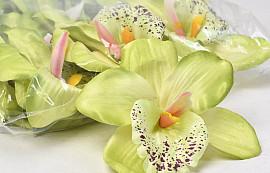 Orchidee D13cm Grün