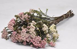 Rice Flower 65cm
