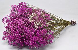 Gypsophila Pink 70cm (25 Branches)