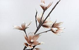 Schaumstoff Magnolia Weiß/Mocca, D 18cm