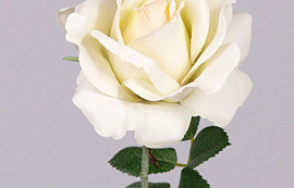 Rose 37cm Cream