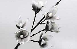 Schaumstoff Magnolia Weiß/Anthrazit, D 18cm