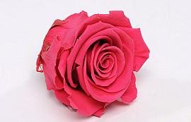 Roses préservé 5cm Rose Foncé