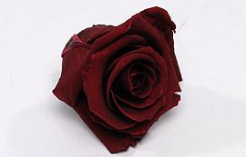Roses préservé 5cm Bordeaux
