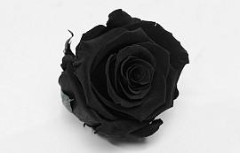 Roses préservé 5cm Noir