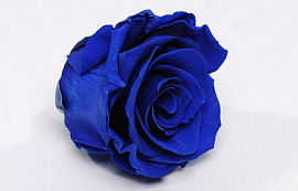 Rose Heads 5cm Royal Blue